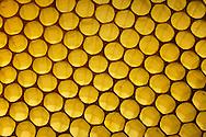 DEU, Deutschland: Biene, Honigbiene (Apis mellifera), Struktur einer Bienenwabe mit leeren Zellen, Wabe besteht aus dem selbst produzierten Wachs der Biene, Bienenstation an der Bayerischen Julius-Maximilians-Universität Würzburg | DEU, Germany: Bee, Honey-bee (Apis mellifera), Structure of a honeycomb with empty cells, the honeycomb is build out of self produced wax from the bees, Beestation at the Bavarian Julius-Maximilians-University Würzburg