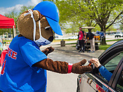 """06 MAY 2020 - DES MOINES, IOWA: """"CUBBIE,"""" the mascot for the Iowa Cubs, wears a face mask and practices social distancing while he hands a bottle of hand sanitizer to a motorist in a drive through at Principal Park, the stadium for the Iowa Cubs, the minor league baseball team affiliated with the Chicago Cubs. Two months after the start of the COVID-19 pandemic Iowa retailers still can't keep everyday items like hand sanitizer, toilet paper, and alcohol based cleaning supplies in stock. Many of the artisan distilleries in Iowa have started making and distributing free hand sanitizer.      PHOTO BY JACK KURTZ"""