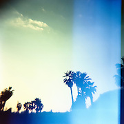 """Palm trees in the late afternoon light in San Pedrito, southern Baja, Mexico.  Captured on film with the cult classic Holga plastic """"toy"""" camera."""