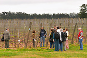 A group of visitors in the vineyard with Elisa Trabal de Bouza and the winemaker XXX Bodega Bouza Winery, Canelones, Montevideo, Uruguay, South America