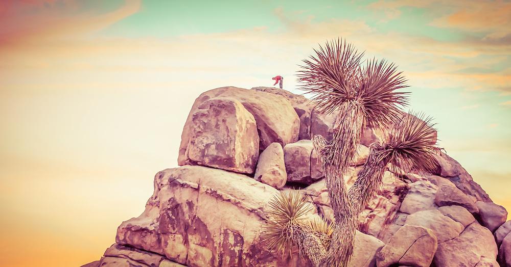 Rock climber bending over with joshua tree next to him.
