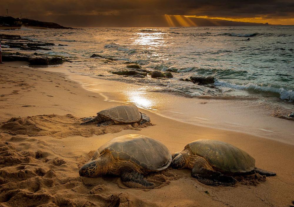 Turtles at Hookipa, Maui Hawaii