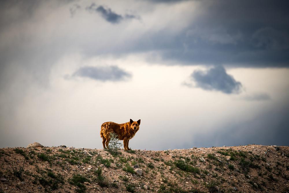 Gravel Pit Road, dog guard, El Prado, New Mexico