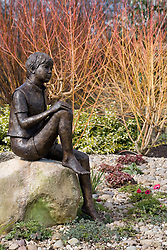 'Boy on a Rock' bronze statue by Jane Hogben with the red and orange coloured stems of Cornus sanguineum 'Midwinter Fire' beyond