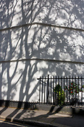 Shadows of a London plane tree on the white painted wall of a period house in King Edward Walk, SE1, in the south London borough of Lambeth. It is afternoon during midsummer and the shadows are lengthening across the white surface pf this well-painted house, located opposite the Imperial War Museum in Lambeth.