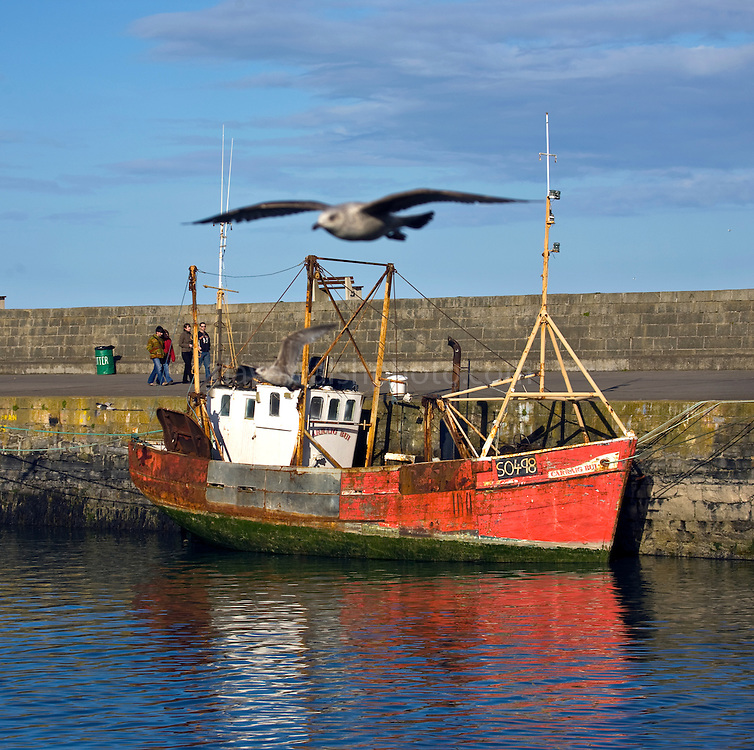 Trawler, Howth harbour Dublin, Carraig Bui (yellow rock), with seagulls flying by