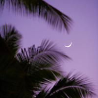 Crescent moon and palm trees at dusk