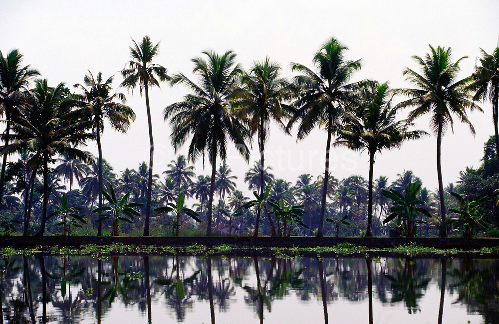 Palm trees in the Backwaters of Ayamenam, Kerala.The Kerala backwaters are a chain of brackish lagoons and lakes lying parallel to the Arabian Sea coast (known as the Malabar Coast) of Kerala state in southern India. The network includes five large lakes linked by canals, both manmade and natural, fed by 38 rivers, and extending virtually half the length of Kerala state. The backwaters were formed by the action of waves and shore currents creating low barrier islands across the mouths of the many rivers flowing down from the Western Ghats range..The Kerala Backwaters are a network of interconnected canals, rivers, lakes and inlets, a labyrinthine system formed by more than 900 km of waterways, and sometimes compared to the American Bayou.[1] In the midst of this landscape there are a number of towns and cities, which serve as the starting and end points of backwater cruises