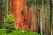 Sequoia and King Canyon National Park, California