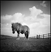 Billy, North Devon 2011