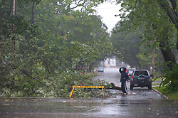 A man looks a tree that fell on Cameron street in Moncton, N.B. as a result of hurricane Dorian pounding the Atlantic Provinces with heavy rain and winds on Saturday September 7, 2019, Canada. Photo by Marc Grandmaison/CP/ABACAPRESS.COM