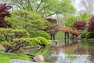 65021-03802 Japanese Garden in spring,  Missouri Botanical Garden, St Louis, MO