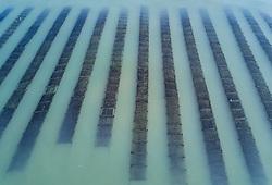 Nov. 21, 2018 - Shishi, China - Aerial photo shows seaweed farms at Gufu Village of Shishi City, southeast China's Fujian Province. Fishermen in Fujian are busy with collecting seaweed as the harvest season comes. (Credit Image: © Song Weiwei/Xinhua via ZUMA Wire)
