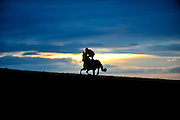 A horse gallops up Nigel Twiston Davies' all weather gallop at sunrise on a cool autumn morning.