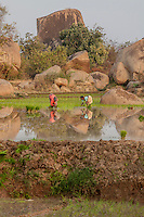 Rice planters work against the backdrop of a boulder formation