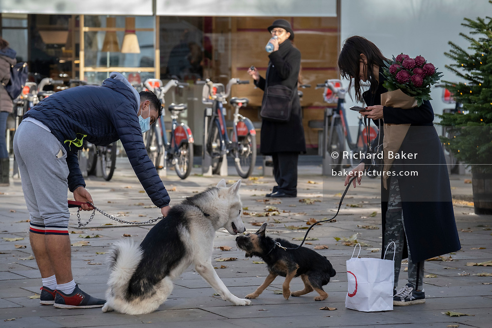 Friendly dogs socialise on the King's Road in Chelsea during the second lockdown of the UK's Coronavirus pandemic, when all but essential retailers and businesses remain shut according to the government's restriction rules, on 13th November 2020, in London, England.