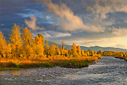 The Gros Ventre River, Narrowleaf Cottonwood, and Sunset Light in Fall, Grand Teton National Park, Wyoming