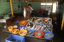 Seafood for sale on stall in Cochin; Kerala; India; near the Chinese fishing nets,