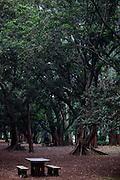 Sao Paulo_SP, Brasil.. .Parque do Ibirapuera em Sao Paulo...Ibirapuera Park in Sao Paulo...Foto: BRUNO MAGALHAES / NITRO