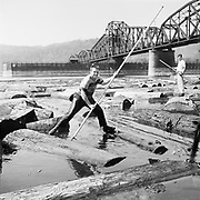 Y-530729-06-01. A log boom man uses his pike pole to float logs down the Willamette river under the old Morrison Bridge in Portland.   July 29, 1953