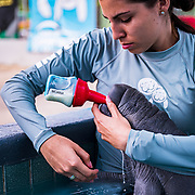 Dayna Mar Gomez, a marine scientist with the Manatee Conservation Center in Puerto Rico, feeds Moana, the baby Manatee. Image release available.