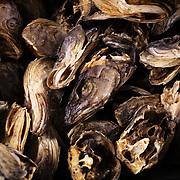 Norway's Fish Culture, Ballstad, Norwegen, Norway, Fischzucht, Fischkultur, Aquakultur, norwegischer Lachs, Salmon, Stockfish, dried fish, Lutefisk, Fisk, Codfish, Fishheads, fish factory, Nordland