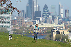 ©Licensed to London News Pictures 20/04/2020  <br /> Greenwich, UK. An early morning dog walker. People get out of the house from coronavirus lockdown to exercise in Greenwich Park, Greenwich, London.Photo credit:Grant Falvey/LNP