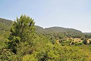 Israel, Carmel Mountain forest