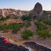 Grapes drying in the Red Valley in Cappadocia