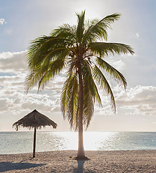 Scenic view of Playa Ancon beach and palm tree, Trinidad, Cuba