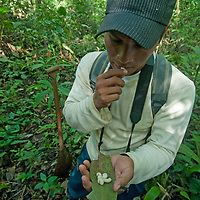 A Yanayacu Indian eats grubs he gathered in Peru's Amazon Jungle.