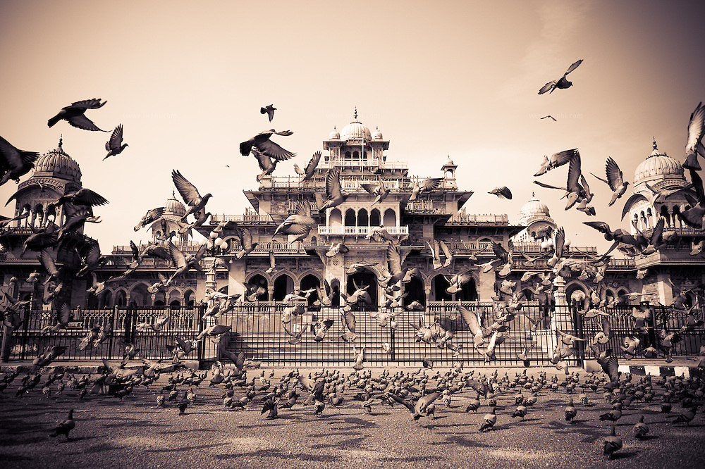 Piegeons flock in front of Albert Hall, the Central Museum of Jaipur. Situated in the Ram Niwas Gardens, was built by Maharaja Sawai Ram Singh II. Its Indo-Saracenic style of architecture is a combination of European style with traditional Indian elements. Albert Hall was named after Queen Victoria's husband Prince Albert, who was the Prince of Wales. Colonel Sir Samuel Swinton Jacob (1841-1917) designed Albert Hall. The foundation stone was laid in 1876 by Albert's son, the Prince of Wales (the future Edward VII).