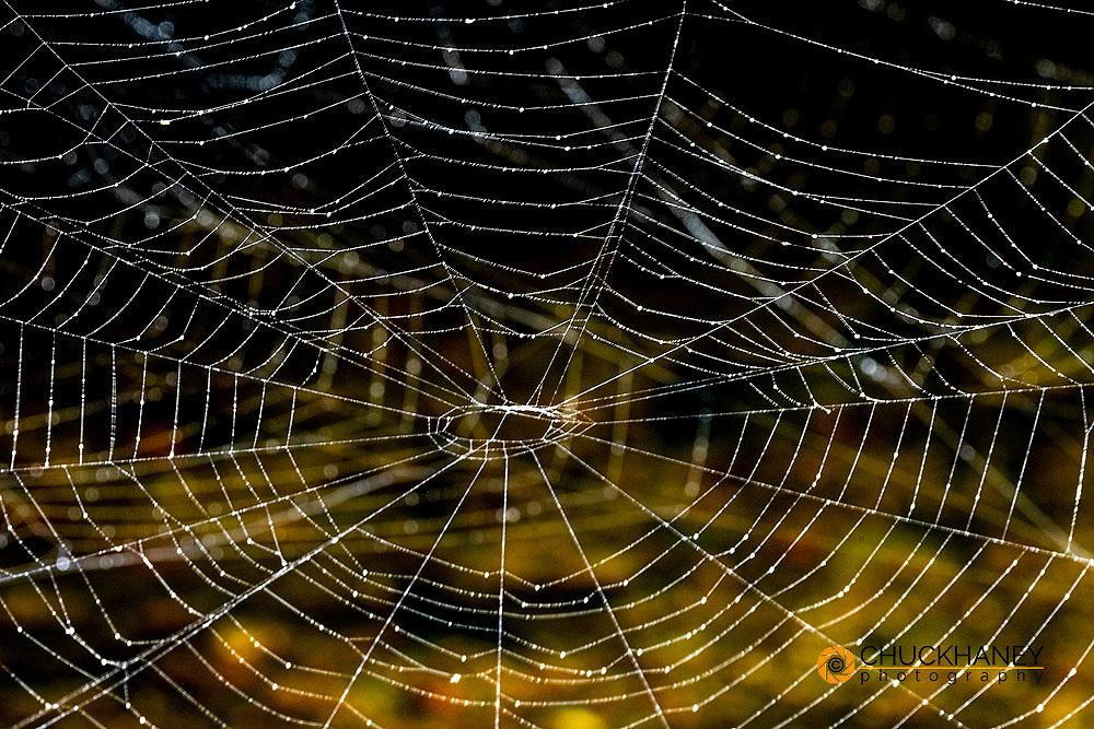 Spider webs in Northeast Harbor, Maine, USA