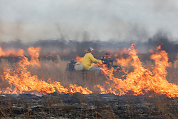 Fireman on ATV managing fire  during a controlled burn on the Daphne Prairie, a remnant of the Blackland Prairie, Mount Vernon, Texas, USA.