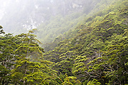 Light mist blankets the forest on the Routeburn Track in Mount Aspiring National Park.