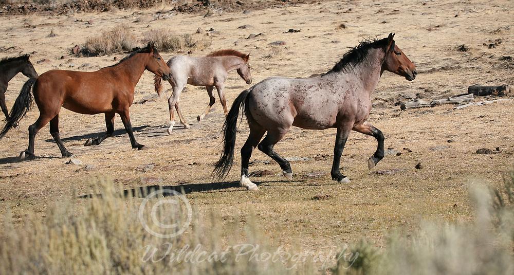 Wild Horses - Steens Mountain