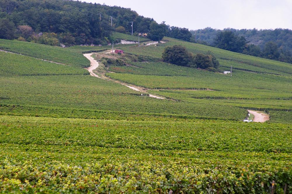 Vineyard. Le Grand Cru Richebourg. Vosne Romanee, Cote de Nuits, d'Or, Burgundy, France