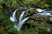 """Sol Duc River<br /> Olympic National Park, Washington<br /> <br /> Just as the translation seems to change with every article written as to what the Quillayute called this place, so does the spelling of the entire area.  I guess I prefer the elegance of Sol Duc to the coarser """"Sole Duck"""" that still even appears on signage there, and I prefer """"magic waters"""" over """"place of the sparkling waters"""", but that's just me.  I'll use artistic license for my titles as well as my images, thank you.  The river comes down the opposite side of the divide from the Hoh, through old growth forests of cedar and douglas fir and hemlock in excess of 200 years of age.  Dead trees, giant ferns, moss everywhere and a thick canopy make for more shades of green than you thought existed.  The river here plunges over a forty foot drop, and is impressive even in this low flow in early autumn. This view is less traditional (most come from the bridge above the falls).  It is but a short trek from the trailhead--a 2 mile round trip--but there is so much to photograph on the way that you best hurry to get there before the crowds do ads it is a popular spot."""