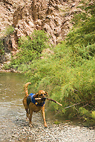 Playing fetch in The Black Canyon, Nevada.