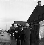 16/01/1960<br /> 01/16/1960<br /> 16 January 1960<br /> Horses for slaughter being loaded for export to the Netherlands, Amsterdam and Dieppe,  from Dublin.