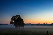 Tree, Mist, Fog, Morning, Sunrise, Blue Sky, Farm land,