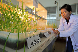 Technical staff working to develop saline resistant rice at the Cửu Long Delta Rice Research Institute, Can Tho, Vinh Long Province, Vietnam