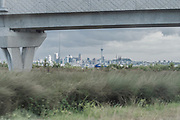 A blue car zipping through native New Zealand Flax and other flora on the Auckland Motorway on a bright grey day. Looking from the south bound motorway through an opening below a concrete bridge towards the skyline and the Skytower of Auckland Downtown, with the Pacific sun pushing through the grey clouds.