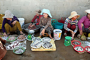 Vietnamese women processing and selling fish and seafood at the local fish market in the coastal fishing village of Ninh Hai, Ninh Thuan province, Central Vietnam. A large variety of exotic fish are available for sale in fresh Vietnamese markets such as this, all being sold on small individual stalls.