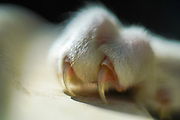 Close up of a cat's claws and nails