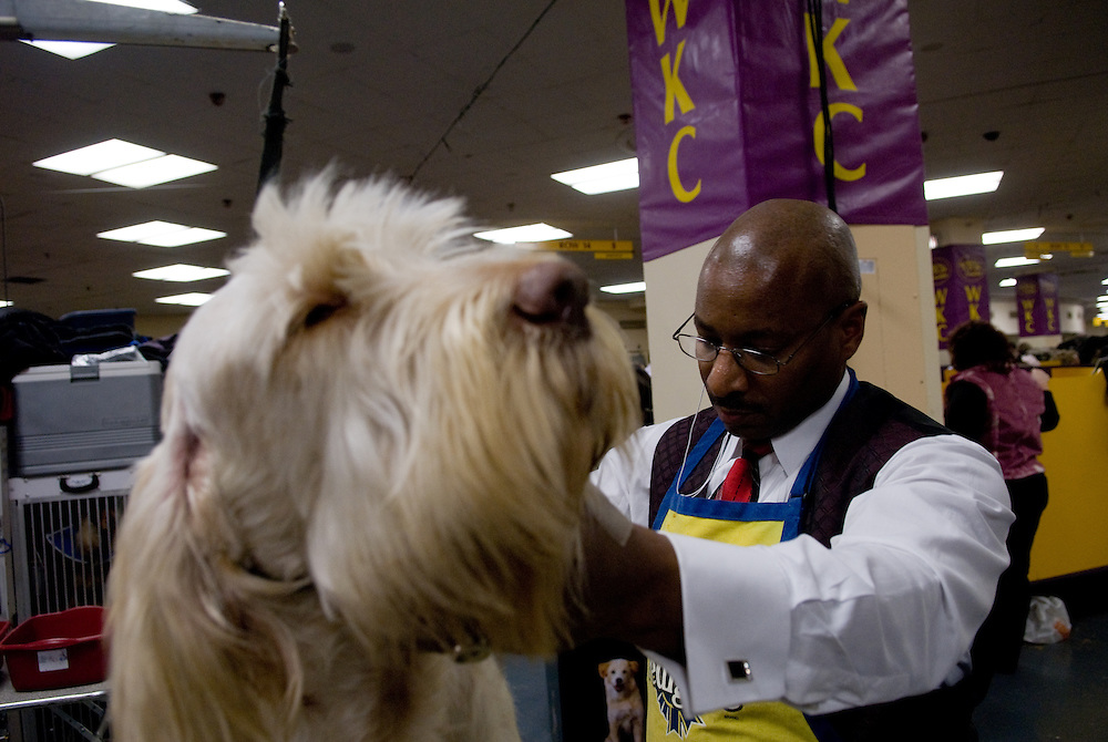 Daryl Cooper, a dog handler from St. Paul, MN, attends the Westminister Dog Show in New York City to present Stella, a Spinone Italiano.