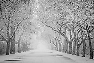 Tree-lined Steet in spring snow, Quogue, Long Island, New York