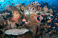 Healthy Hard Corals, Sponges, and teeming reef fish<br /> <br /> Shot in Indonesia