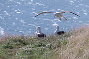 New Zealand, South Island, seagull on the shore