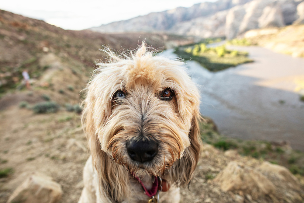 portrait of a fluffy dog on the River trail at Dinosaur Monument in Utah